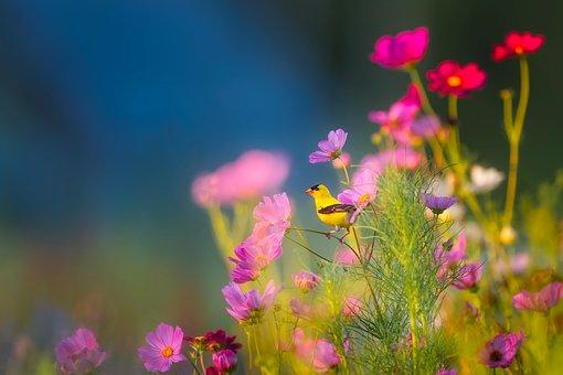 fleurs55