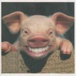 face-de-porc