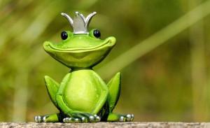 frog-2240764_640